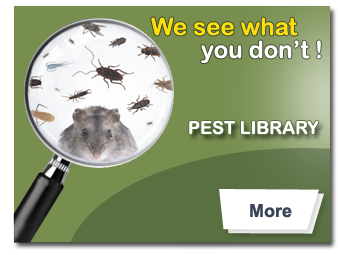 pest library
